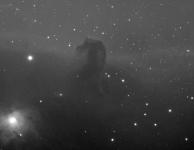 Paardekopnevel (B33) 12 x 15 min Luminance