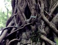 Spookachtige bomen en huilende wind