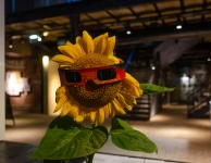 A Flower and a Sun