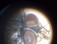 Helios in de Microwereld van Discoverit