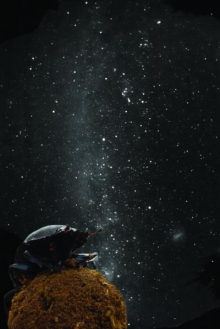 Mestkevers gebruiken Melkweg om te navigeren